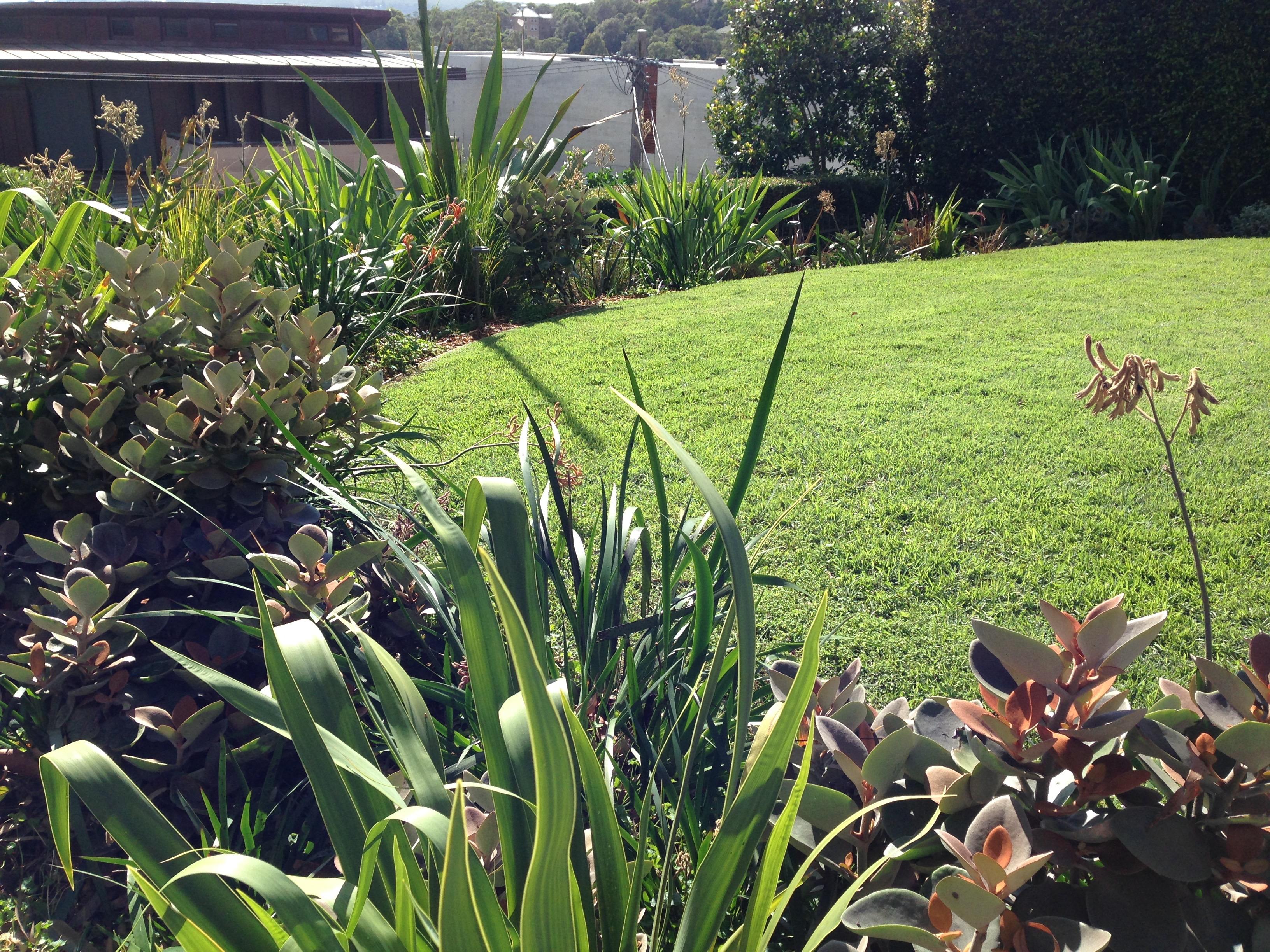 Designing with Succulents Janna Schreier Garden Design