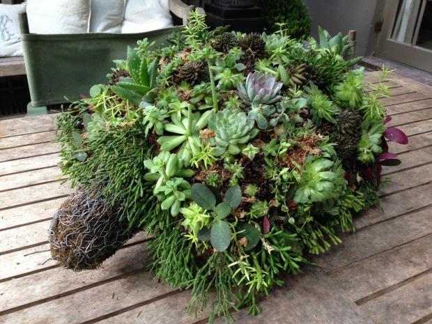 Rosie's Succulent Tortoise. Janna Schreier