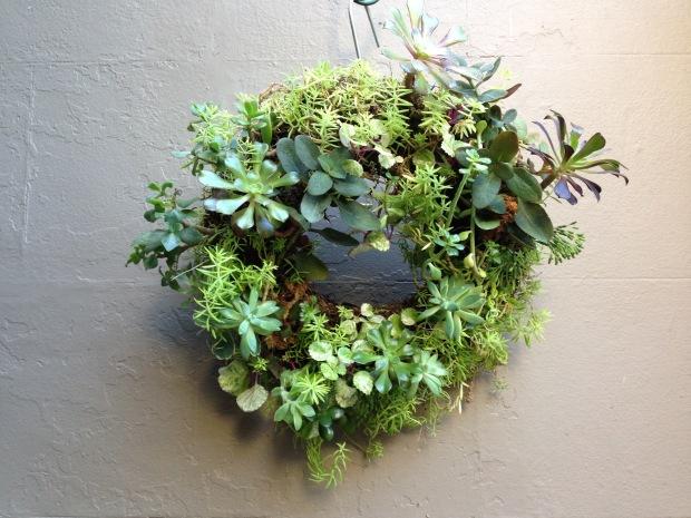 Rosie's Succulent Wreath. Janna Schreier