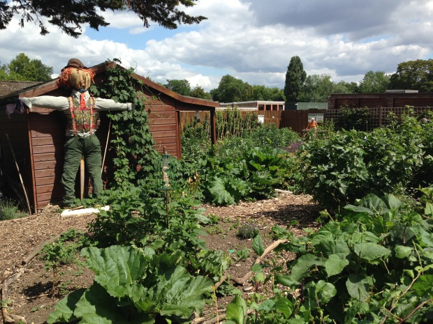 Scarecrow in the Regent's Park Allotment Garden
