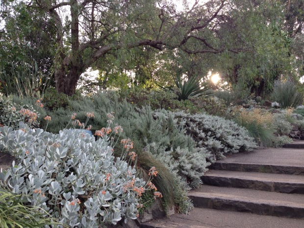 Silver succulents and non-succulents. Janna Schreier