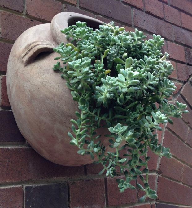 Succulent Wall Pot at Ginge. Janna Schreier