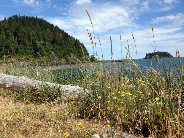 Coastal grasses and wildflowers in Haida Gwaii. Janna Schreier