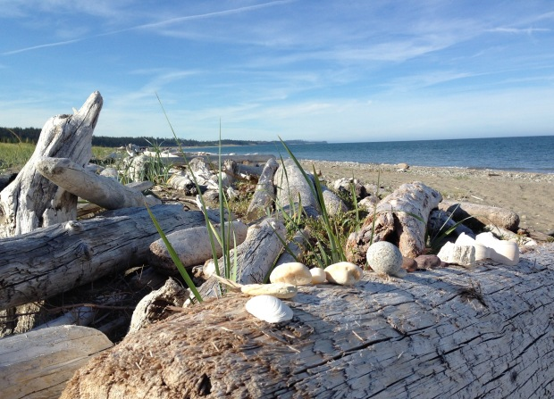 Driftwood and shells on the beach at Tlell. Janna Schreier