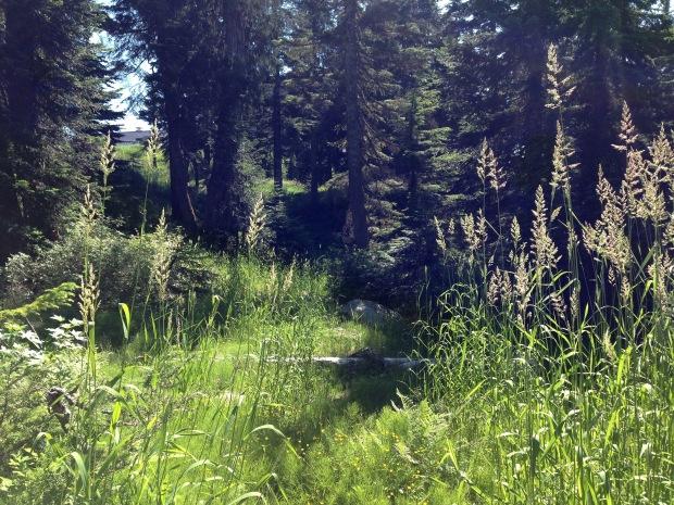 Ecowalk on Grouse Mountain. Janna Schreier