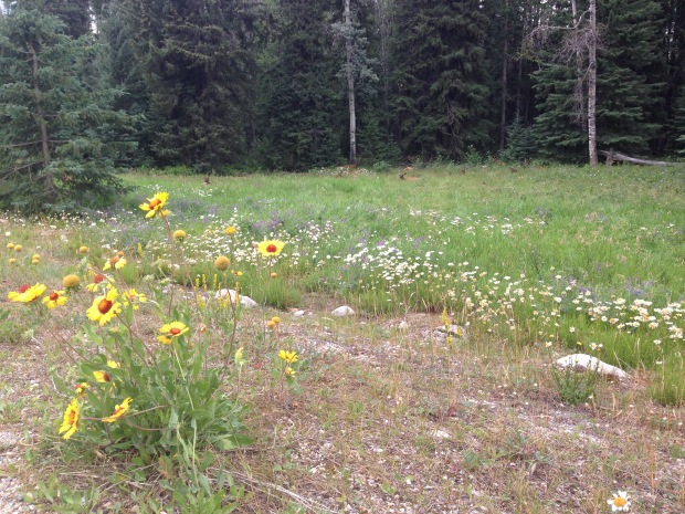 Gaillardia and Elks at Jasper. Janna Schreier