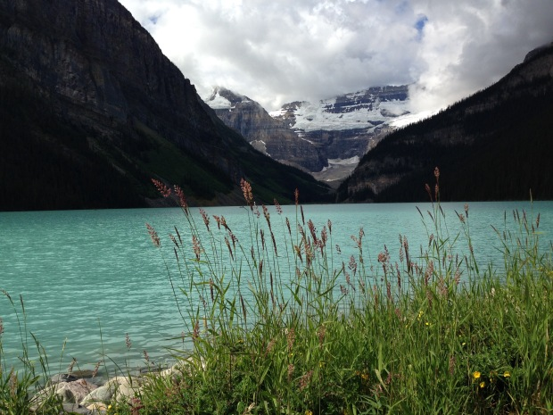 Grasses at Lake Louise. Janna Schreier