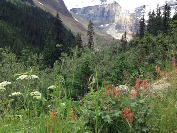 Indian paintbrush harebells at Lake Louise. Janna Schreier