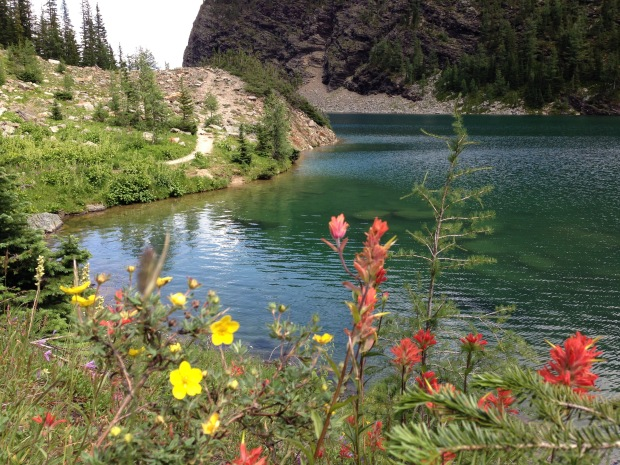 Mixed wildflowers at Lake Agnes. Janna Schreier