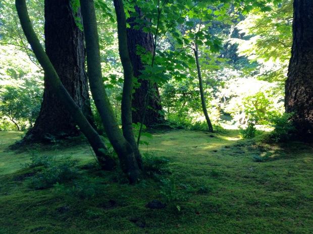 Mossy carpet at Nitobe Japanese Garden. Janna Schreier