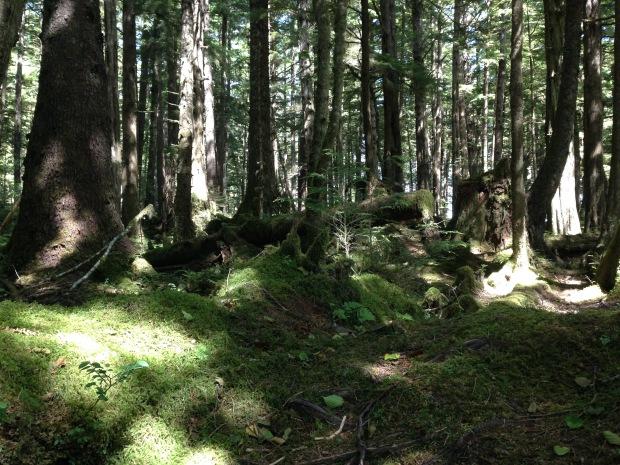 Mossy forests in Haida Gwaii. Janna Schreier