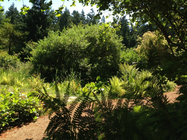 Native garden at the University of British Columbia Botanic Gardens. Janna Schreier