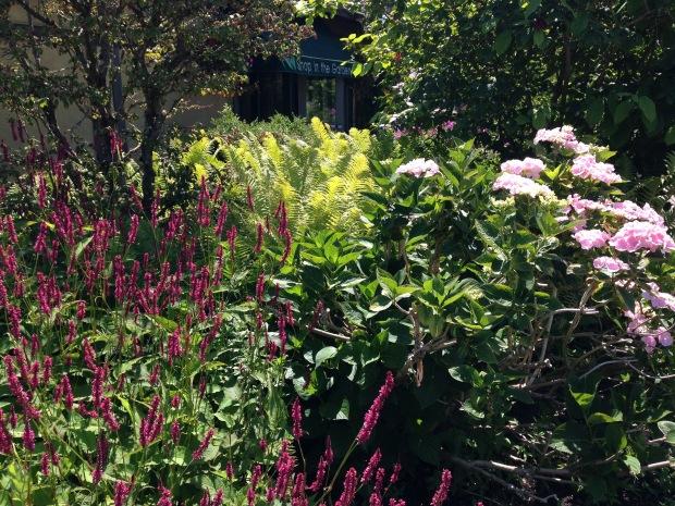 Persicaria, Hydrangea and ferns. Janna Schreier