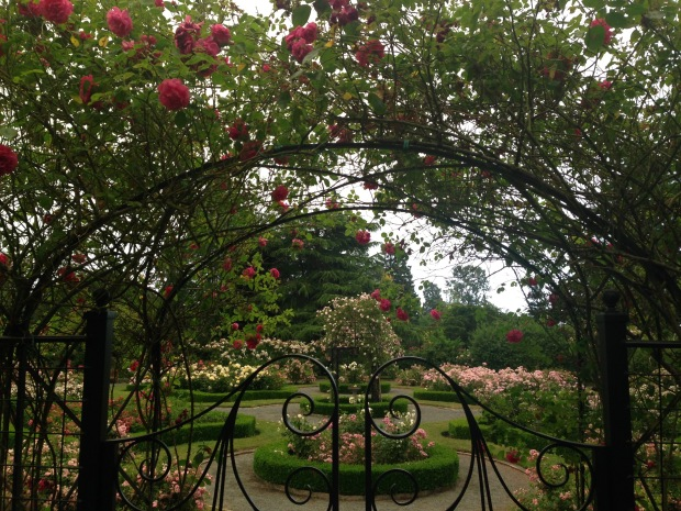 Rose garden at Government House, British Columbia. Janna Schreier