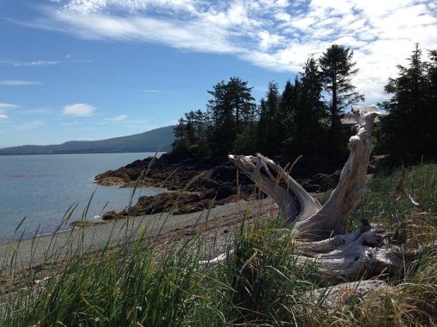Sculptural driftwood at Haida Gwaii. Janna Schreier