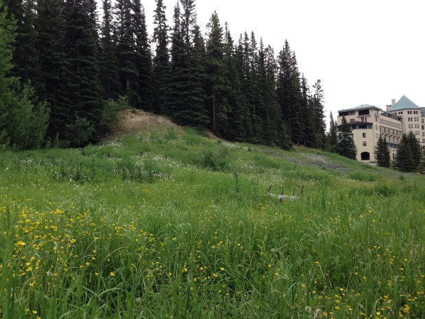 Wildflower meadows at Fairmont Chateau Lake Louise. Janna Schreier