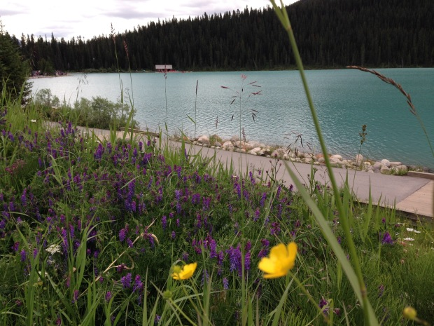 Wildflowers at Lake Louise. Janna Schreier