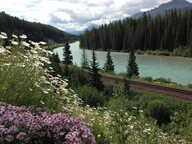Wildflowers on the train embankment near Banff. Janna Schreier