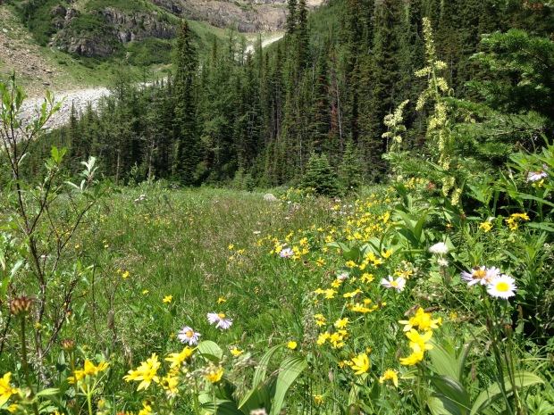 Yellow and white wildflower meadow near Lake Louise. Janna Schreier