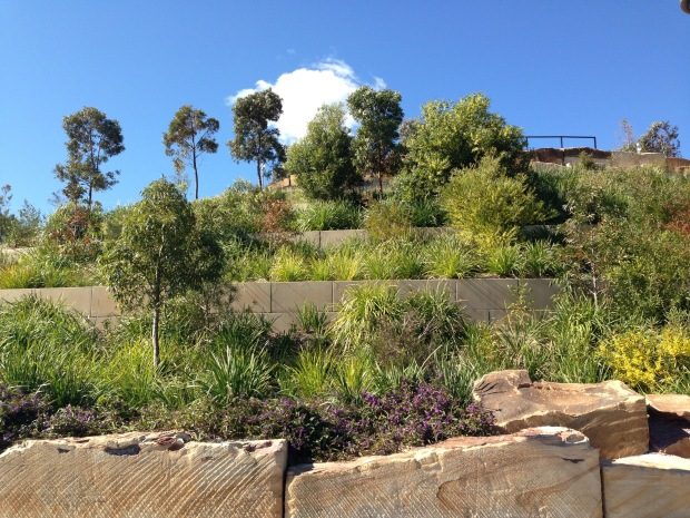 A sense of place at Barangaroo Reserve