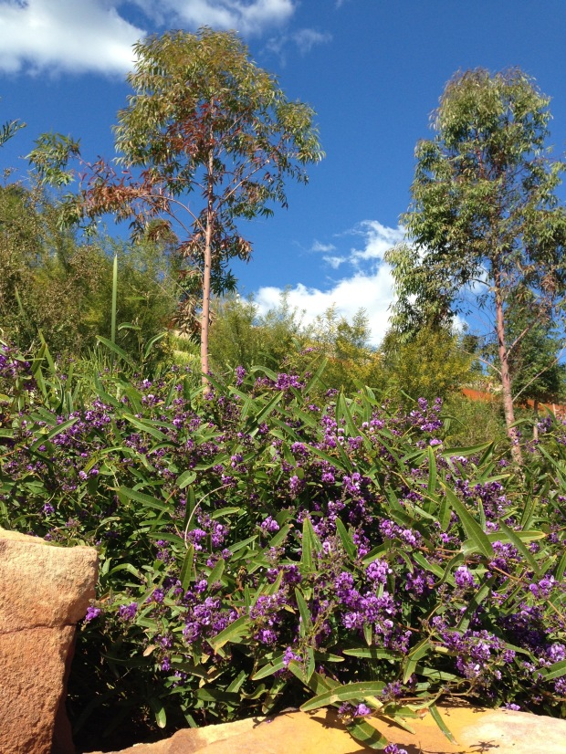Australian colour at Barangaroo Reserve