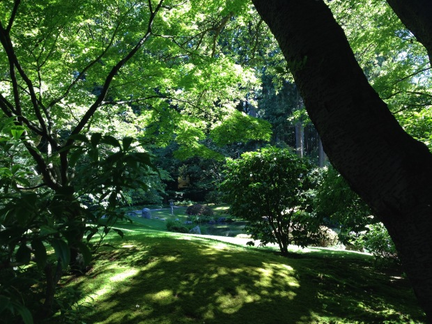 Beautiful light at Nitobe Japanese Garden