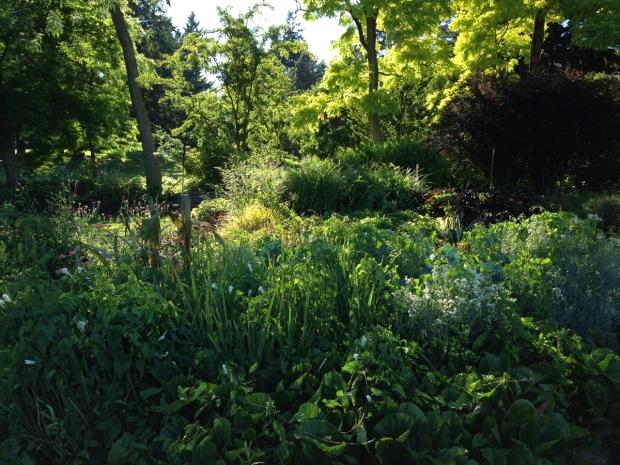 Generous planting at VanDusen Botanical Garden