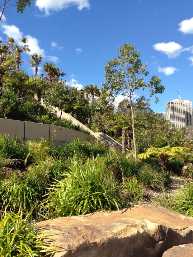 Glimpse of the city from Barangaroo Reserve