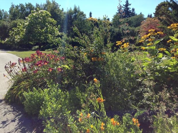 Gorgeous daylilies in VanDusen Botanical Garden