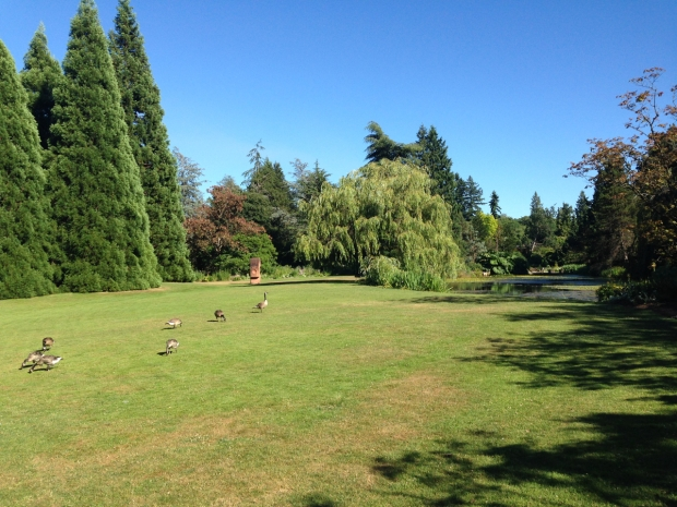 Grand conical pines and happy wildlife at VanDusen Botanical Garden