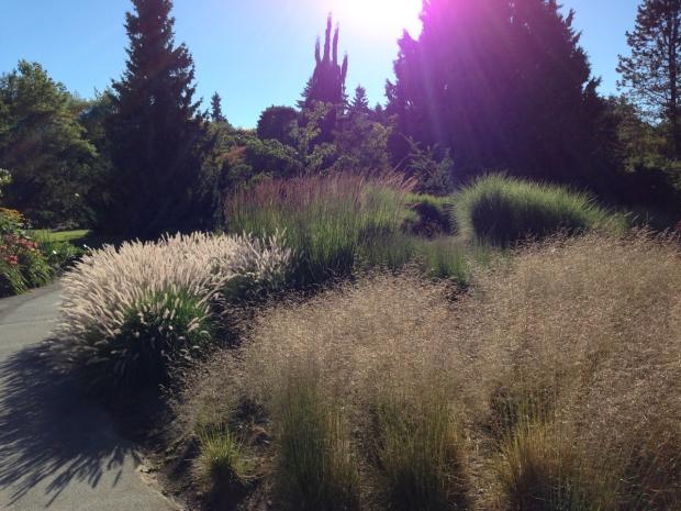 Grasses in the late afternoon light. Janna Schreier