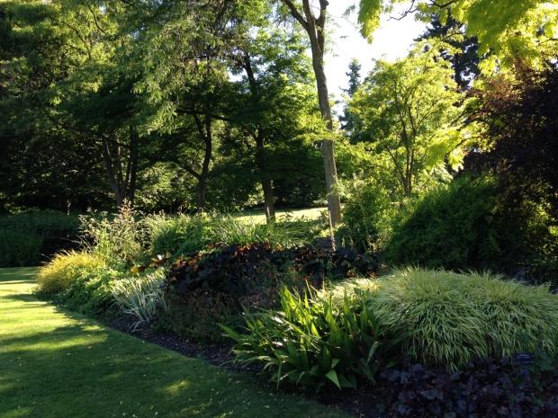 Healthy new growth brings an almost florescent light in VanDusen Botanical Garden