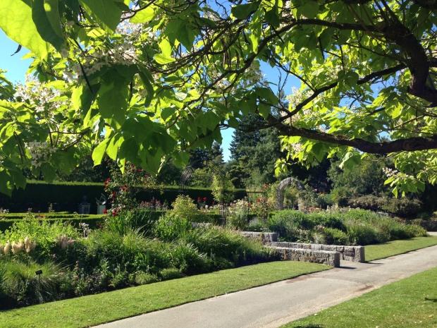 Informal plantings border the formal Rose garden at the VanDusen Botanical Garden
