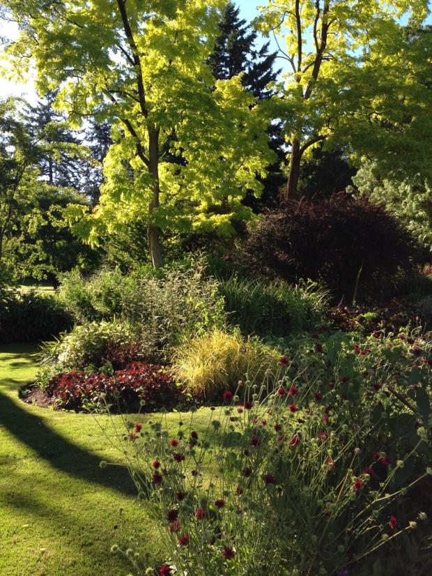 Limes and burgundies at Van Dusen Garden. Janna Schreier