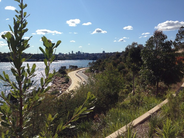 Looking down across the terraces of Barangaroo Reserve