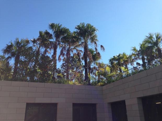 Much of Barangaroo Reserve is one big roof garden