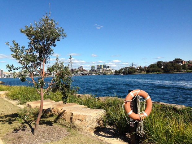 Simple foreshore plantings at Barangaroo Reserve