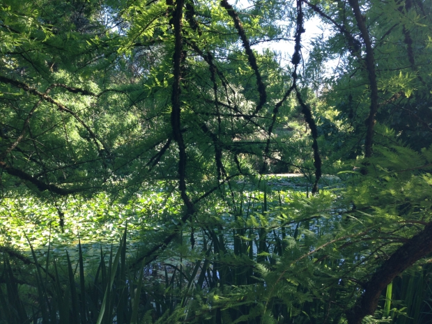 The Cypress Pond at VanDusen Botanical Garden