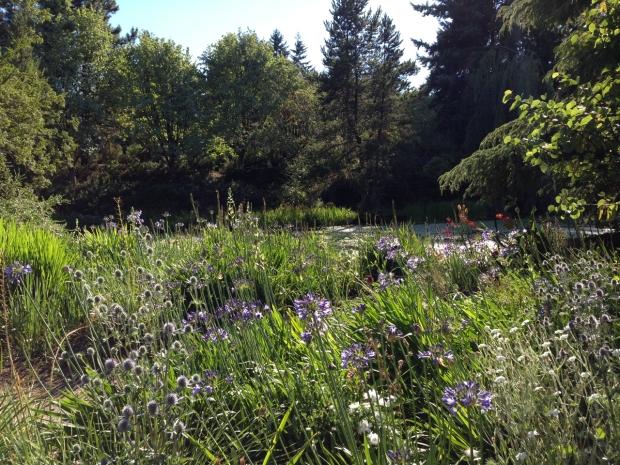 Wonderful mix of sun loving plants at VanDusen Botanical Garden