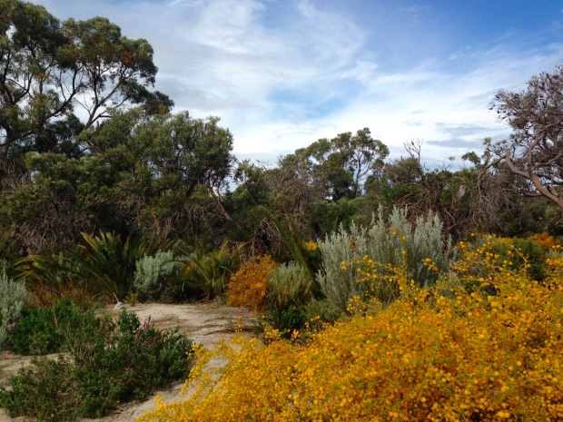 Acacia and Zamia in Bold Park, WA