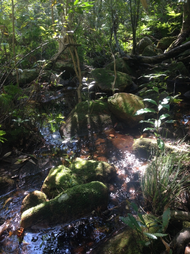 Deep green vegetation and mossy rocks at Muogamarra Nature Reserve