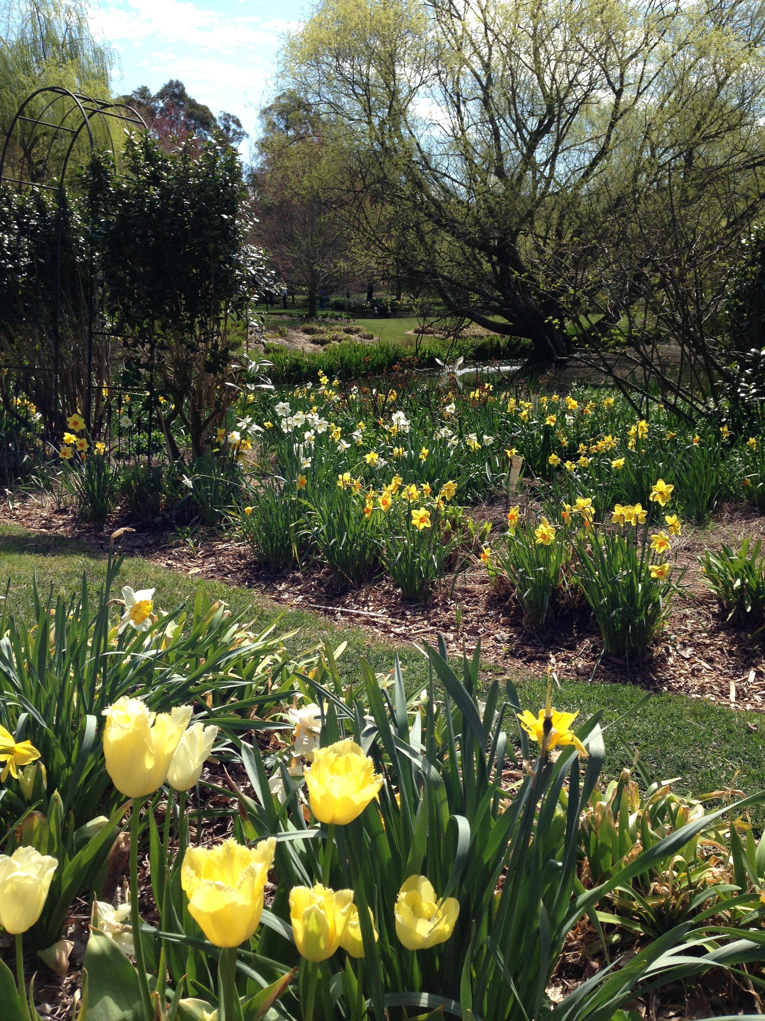Daffodils At Rydal: Opening My Mind