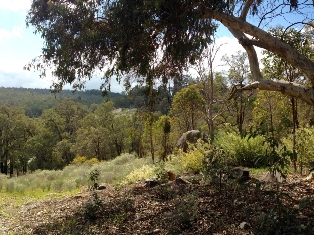 Soft yellows and green in the Perth Hills