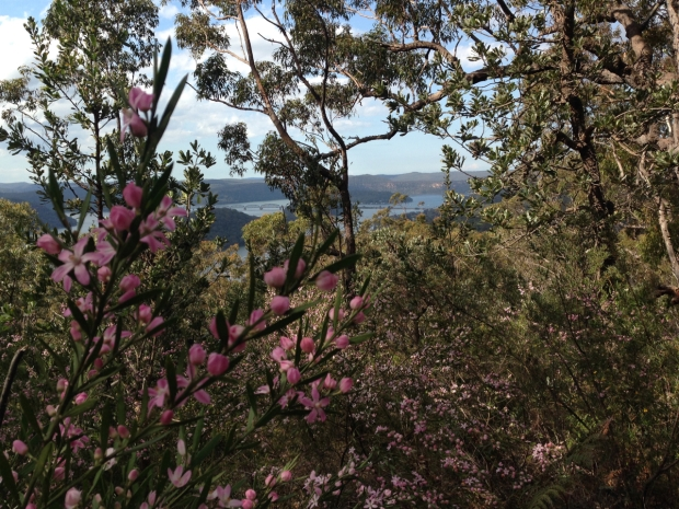 View of the Hawkesbury River from Muogamarra