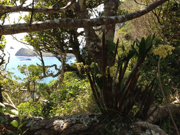 Another gorgeous spot; orchids and lichen with a view out to the islands
