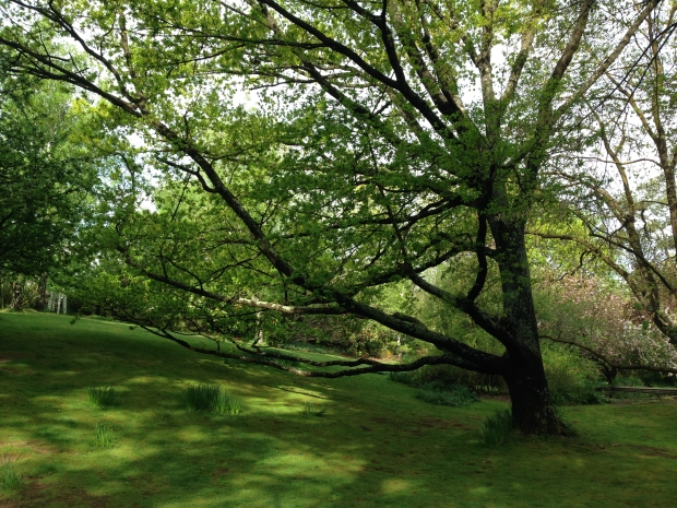 Majestic trees, including this English oak, with gravity defying limbs seem to sweep the contours of the land; every feature in this garden looks 'meant to be'