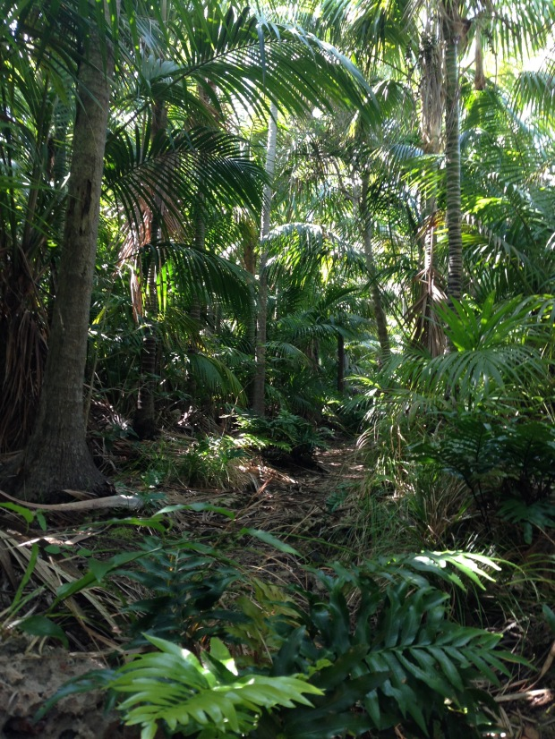 Palms (Howea) and ferns (Asplenium) were typical low land scenery on our many walks around the island