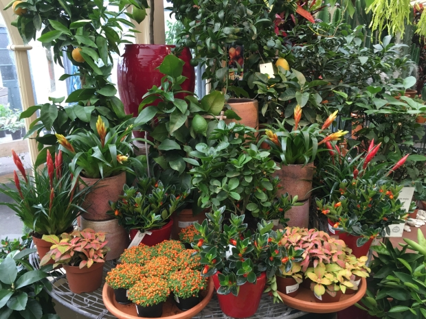 Citrus and bromeliads; almost as though I were still in Sydney