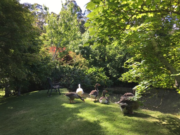 A garden is not complete without ducks or geese; this one is for you, Jessica!
