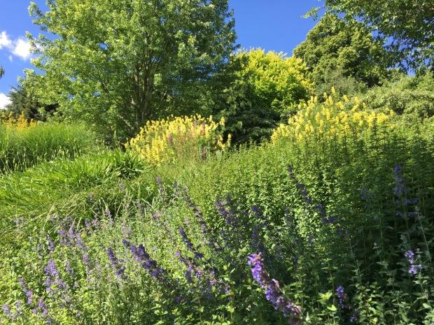 Exuberant, generous planting bring a lush feel to Tieve Tara